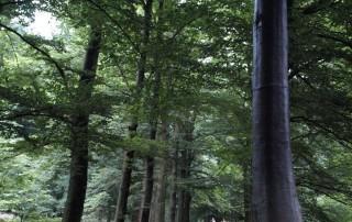 boom-buitenbeeldinbeeld-nl